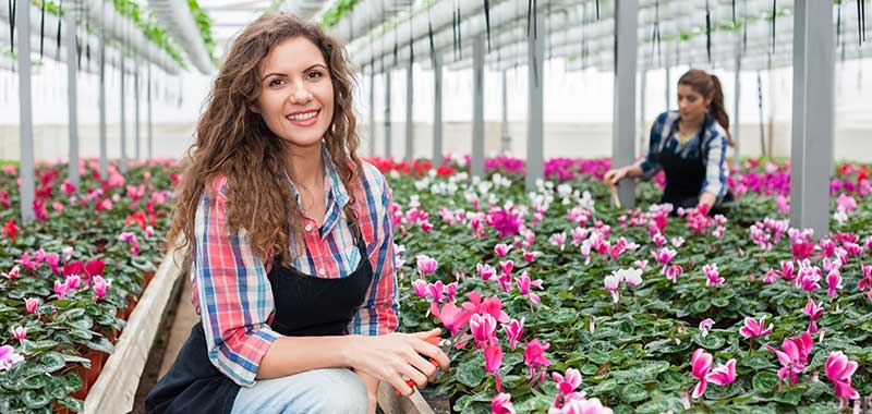 Working in the greenhouse, hire a professional