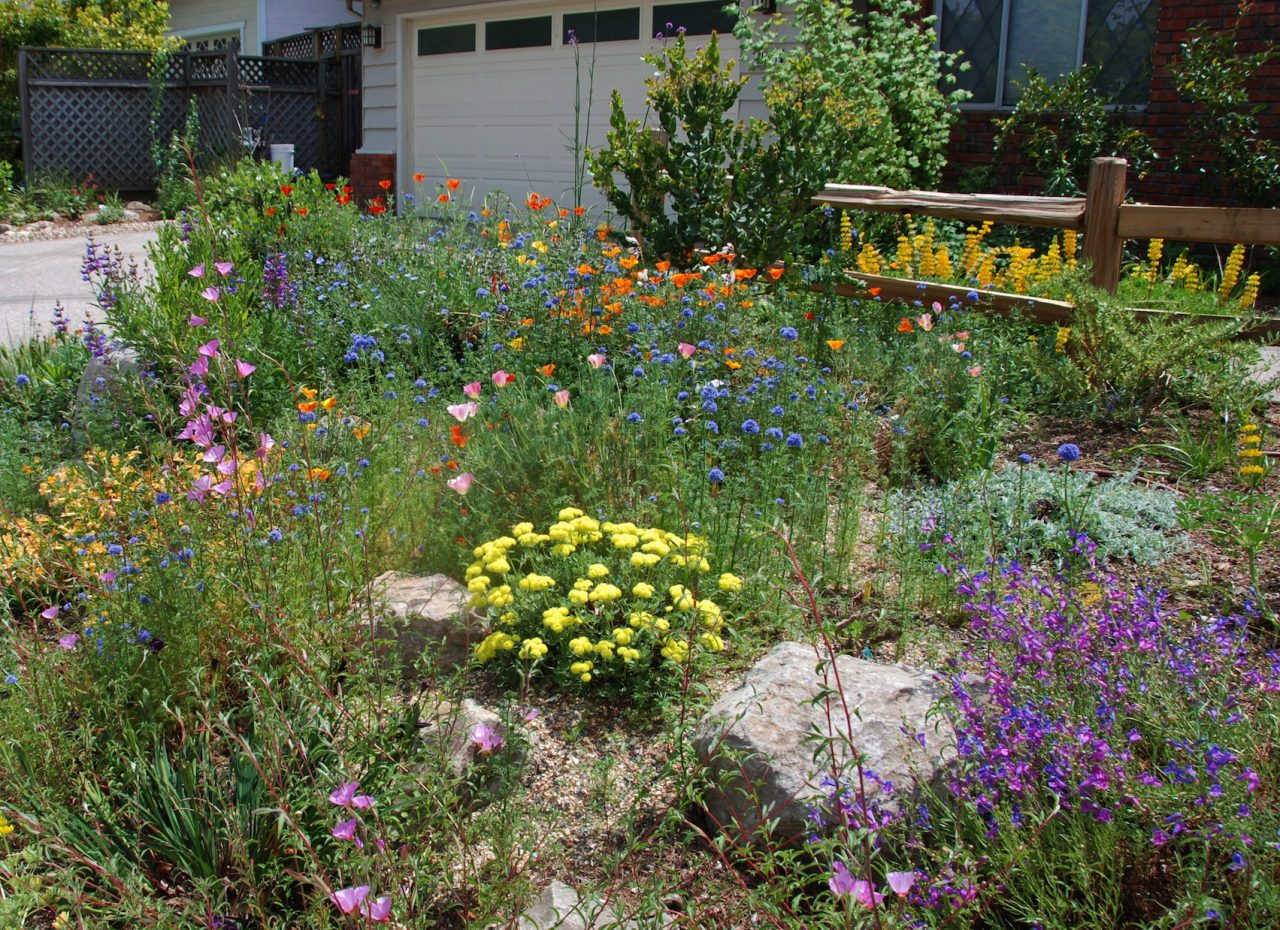 Transforming your yard into a native plant oasis need not be a daunting task! Here's an example of a small front yard's native landscaping by Pete Veilleux of East Bay Wilds.
