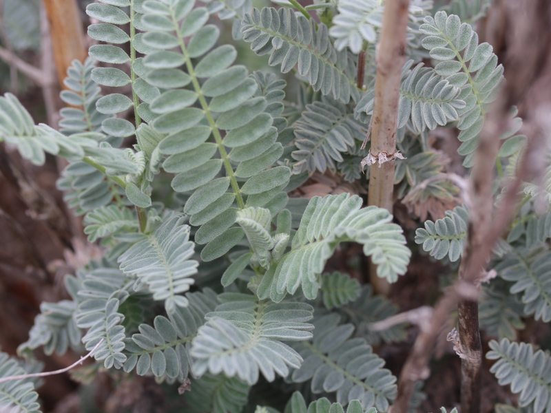 Rare Plant Science