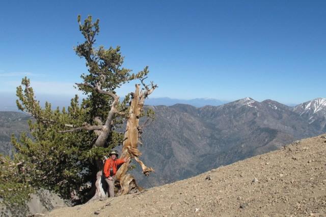 Mount Baden Powell