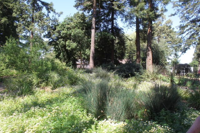 A native garden in Berkeley, California
