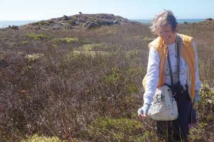Rare plant botanist and CNPS member Toni Corelli volunteered her time and expertise to petition on behalf of the endangered coast yellow leptosiphon.