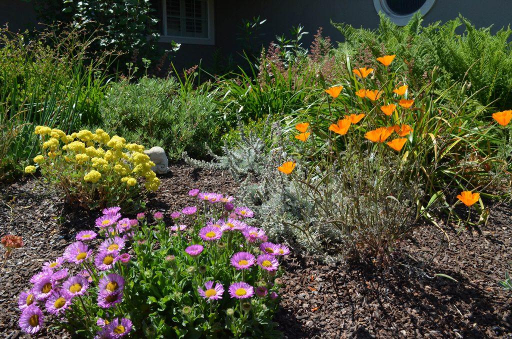 East Bay Garden Ambassador S Garden California Native Plant Society