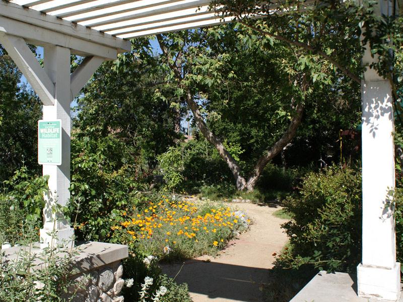 California Native Plant Society