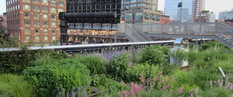 High line in New York City showing green plantings and skyscrapers