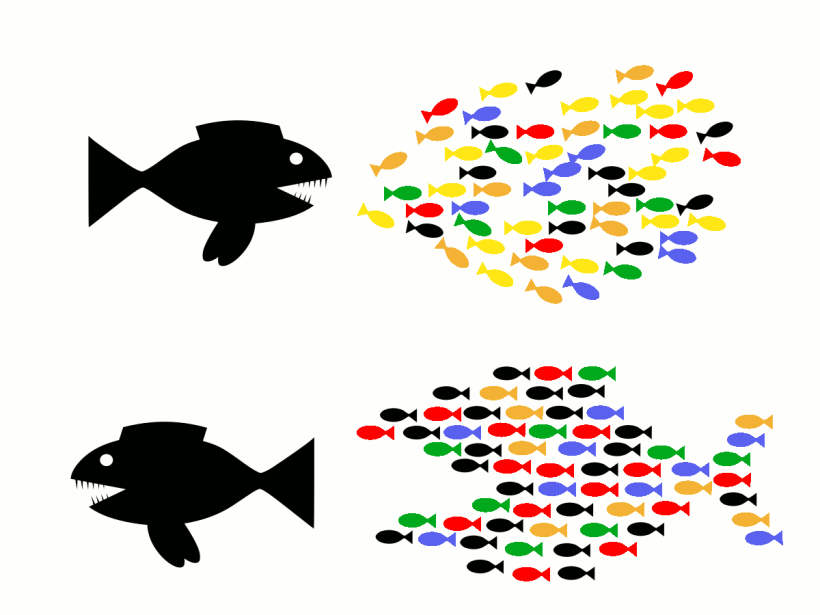 intersyndical - union fait la force - solidarite - CNT - poissons