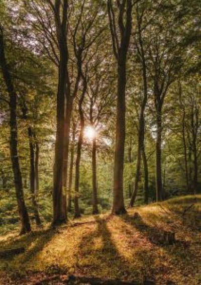 plaatje van zonsopkomst in bos, ondersteunt tekst wandelcoaching Eindhoven