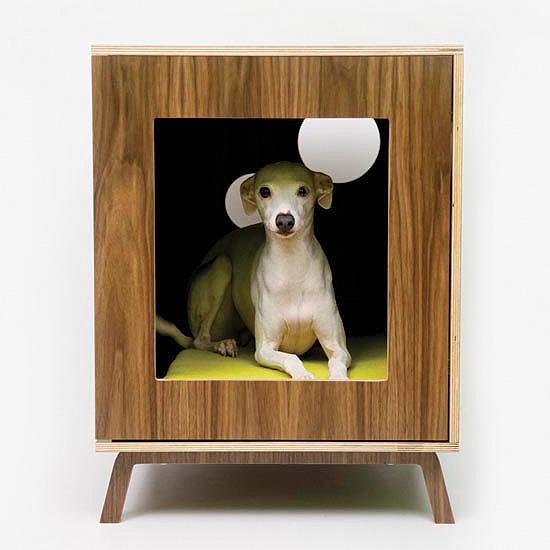 modernist-pet-2