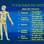 Our Immune System Is Our Best Pharmacy