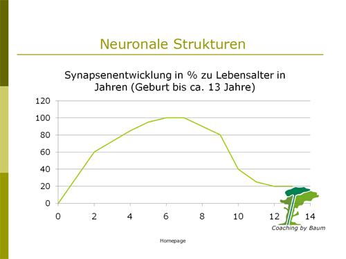 Folie: neuronale Strukturen