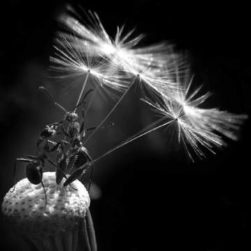fallschirmspringer-ameisen
