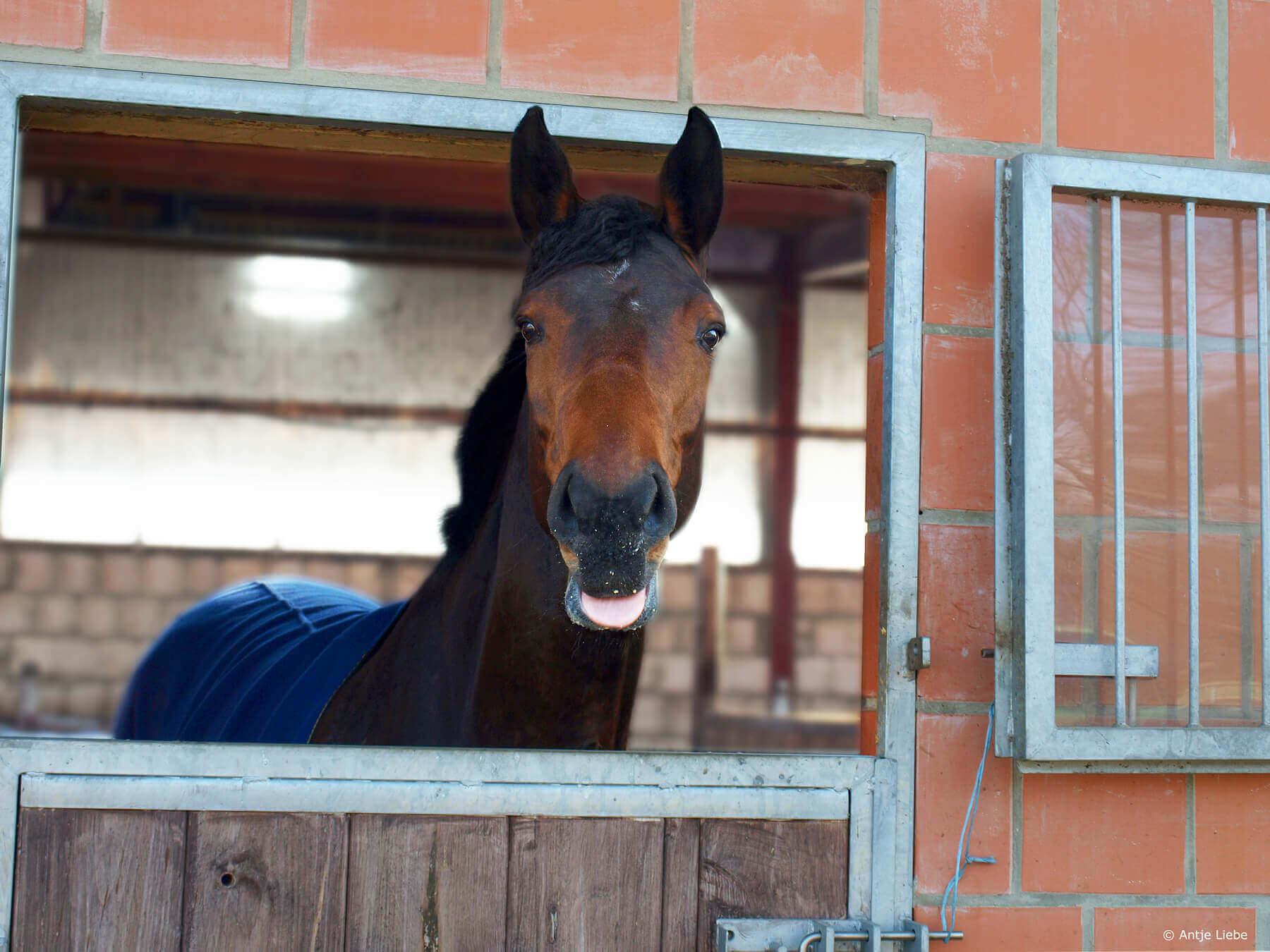 Galdina - Coaching mit Pferden Harz