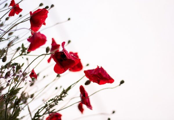 Een prachtig gedicht over ont-moeten, afbeelding met klaprozen