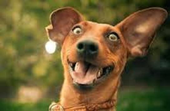 Felicità - cane felice