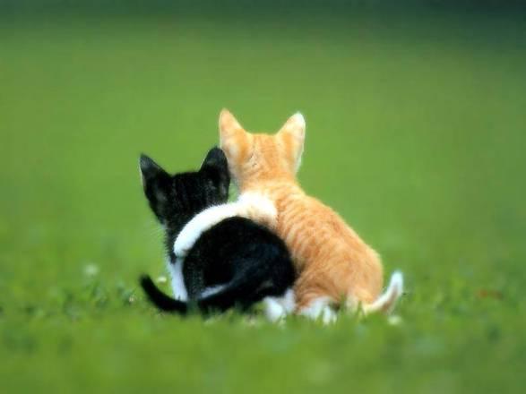 amici (gattini)
