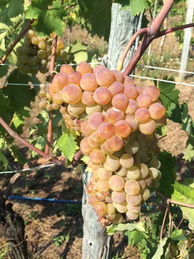 Un grappolo d'uva che parla da solo...