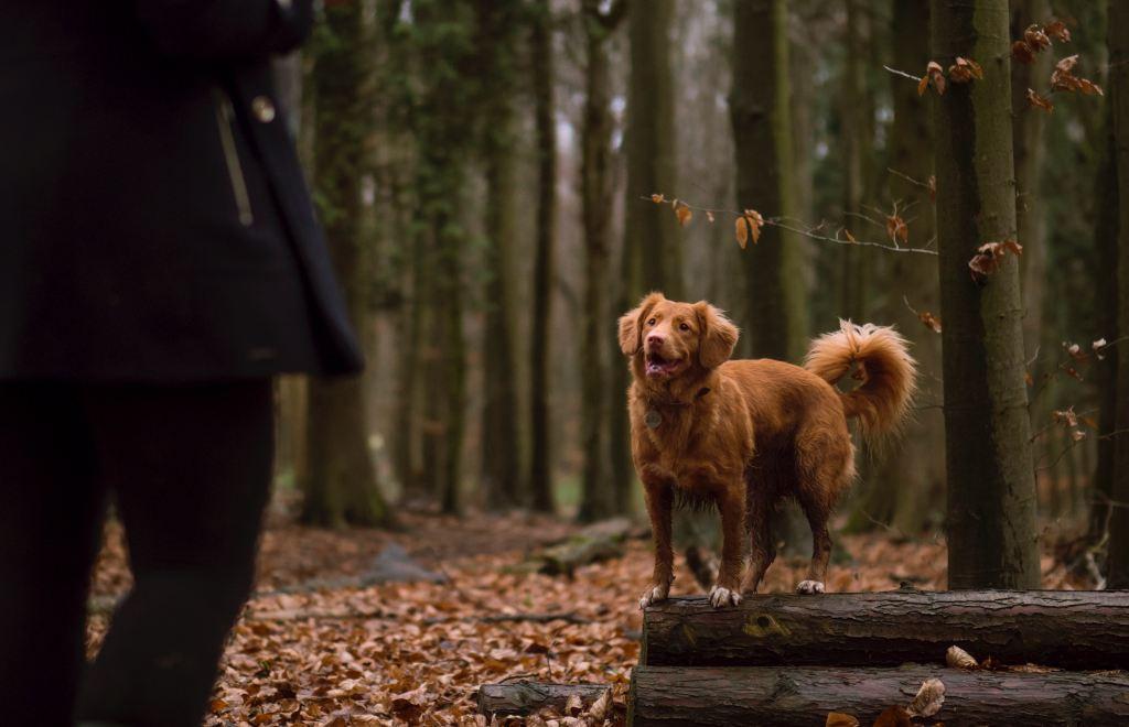 Luisteren in het bos