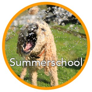 Summerschool