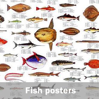 fish identification posters