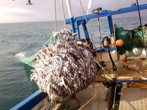 fishing trawl net