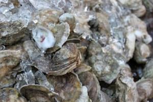 DeBordieu Colony real estate, Pawleys Island SC, oyster roast