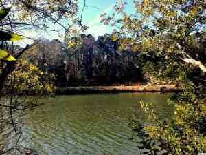 Lot 41 Lantana, extra wide, wooded lot on lake overlooking nature preserve. $189,000