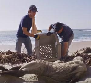 Coastsider Ashley Gray Featured in Dawn Video