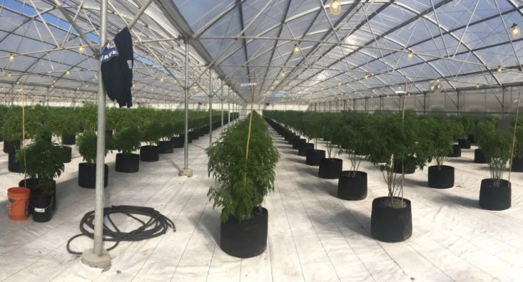 GG Passes. Local Farmers Can Grow Cannabis Starts in HMB