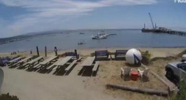 Mavericks Surf and Paddlesports Company Outer Harbor Nest Cam
