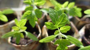 plant-999375_1280