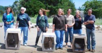 volunteers-at-release