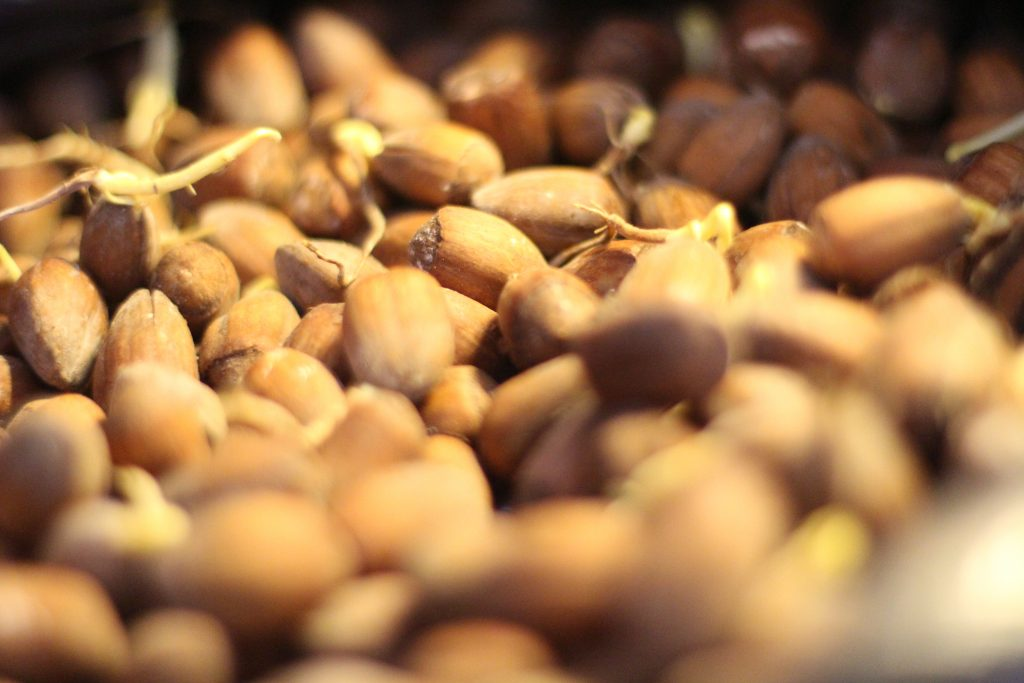 What to do with your nuts