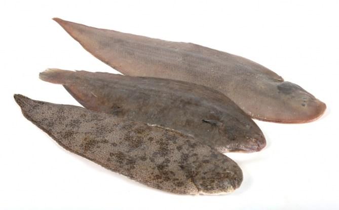 cocedero-de-mariscos-pescado-01