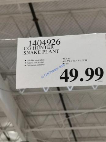 Costco-1404926-CG Hunter-Snake-Plant-tag