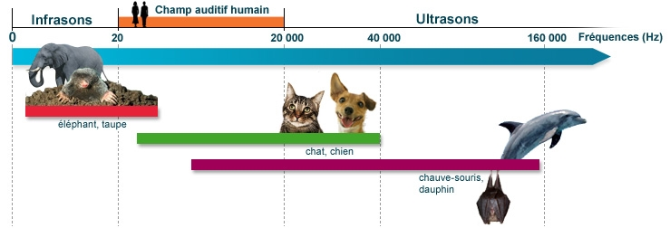 Fréquences perçues par l'homme et quelques espèces animales