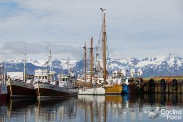 Viaje a Islandia durante el Coronavirus - Húsavík ballenas