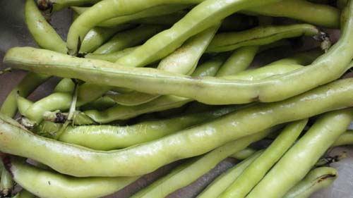 Las habas son unas legumbres que poseen una vaina alargada y de consistencia carnosa que las hace especialmente buenas para purés, sopas o cremas.