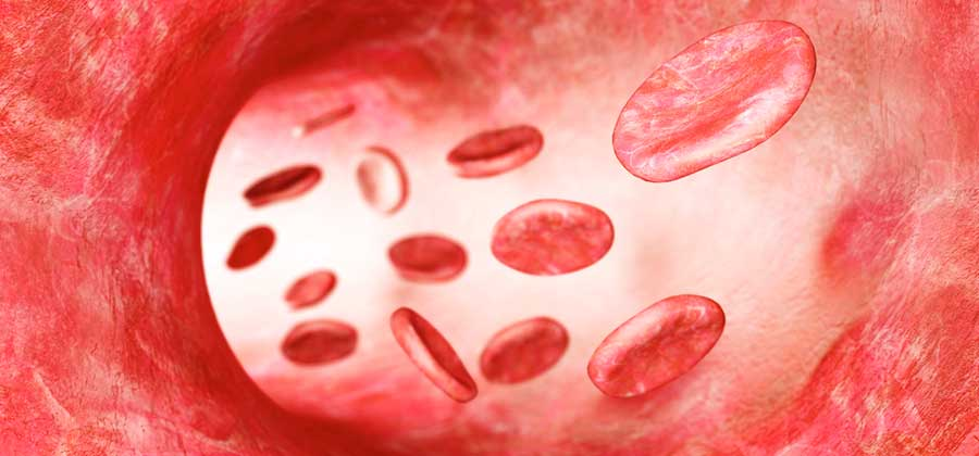 circulacion sanguinea para que sirven las semillas de uva