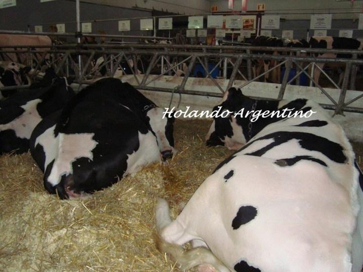 holando-argentino