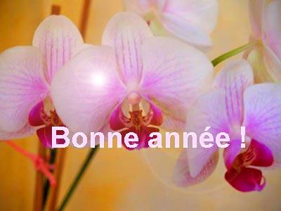 orchidee © cocineraloca.fr
