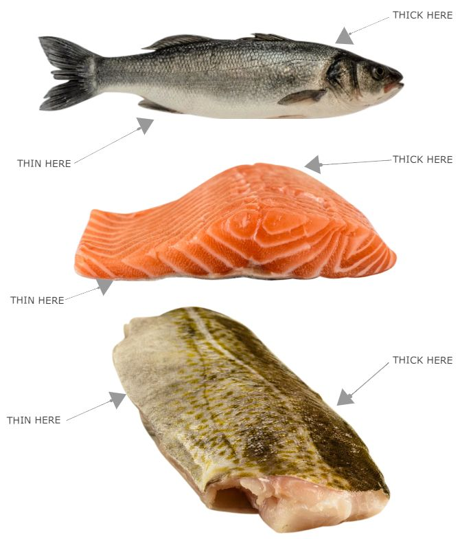 different shapes of fish