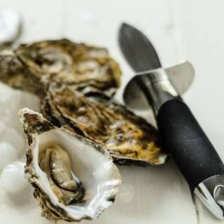 Best Oyster Knife Review: Find The Right Killer And Shuck Like A Pro