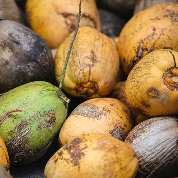 Coconuts photo courtesy Max Lakutin at Unsplash