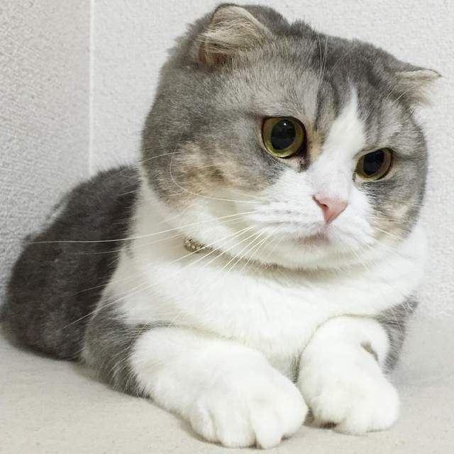 貓奴是《貓足控》照片滿滿的都是圓滾滾治癒的貓腳腳~ - COCO01