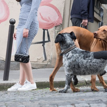 Style blogger Cee Fardoe of Coco & Vera stands next to two dogs carrying a Chanel extra mini handbag