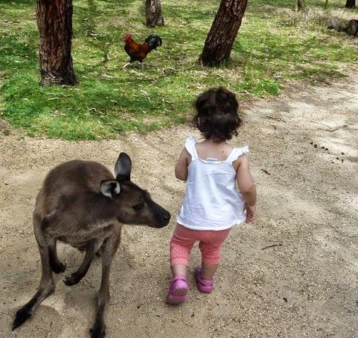 Australian kangeroo park