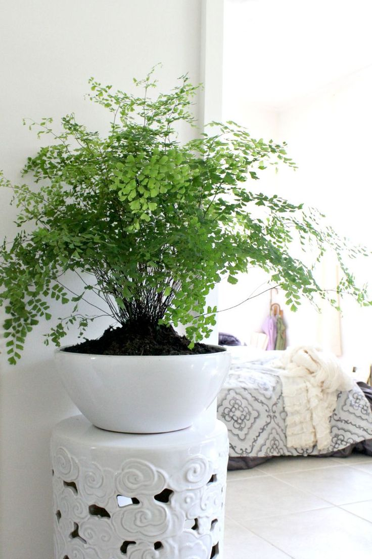 plante interieur passage deco