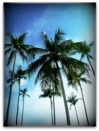 Coconut Oil: Learn more free here with Coconut Camp