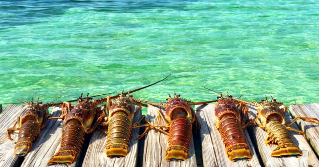 Lobster Fest in Belize