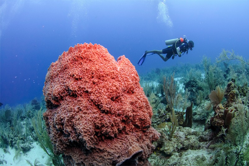 belize diving trips